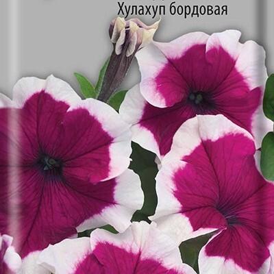 Грандифлора цветов